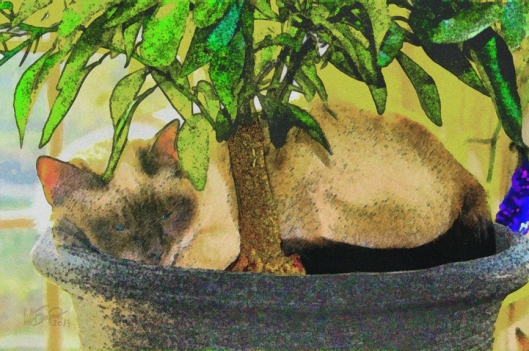 Under the Yumyum Tree