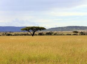 savanna